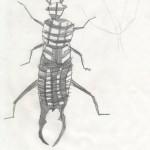 infanzia_insetti